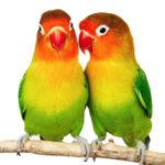 Fugle artikler