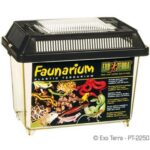 Fauna Boxe